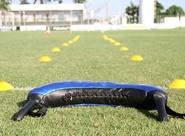Antes de viajar, alvinegros treinarão na manhã desta sexta-feira